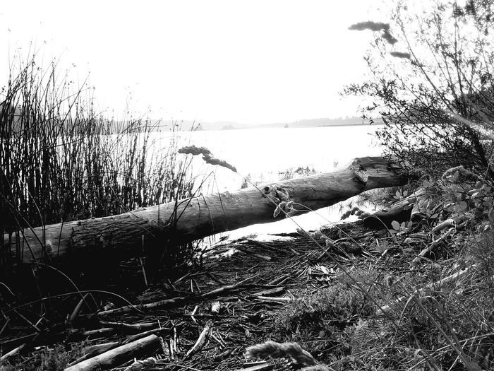 shades of grey Creative Photography EyeEm Nature Lover Creativity Beauty In Nature Beauty In Ordinary Things Beauty Is Everywhere  EyeEm Creative Creative Light and Shadow Oregon Oregon Coast Siuslaw River Florence OR Water Sea Beach Sky Horizon Over Water Ocean Reed Reed - Grass Family