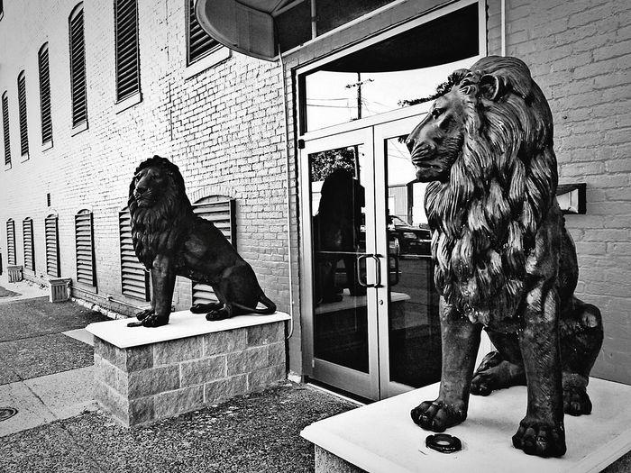Lionsden Hola! ✋ Hello World Black & White Black And White