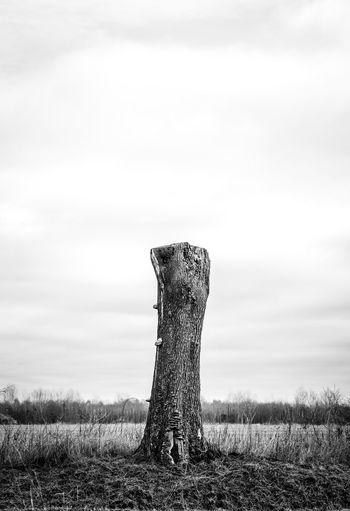 Sky Field Plant Tranquility Tree Tranquil Scene Landscape Cloud - Sky No People Environment Beauty In Nature Trunk Bark Wooden Post Cutting Break Incisions Dead Plant Sad Sadness Desolate Loneliness Alone Isolated Remote