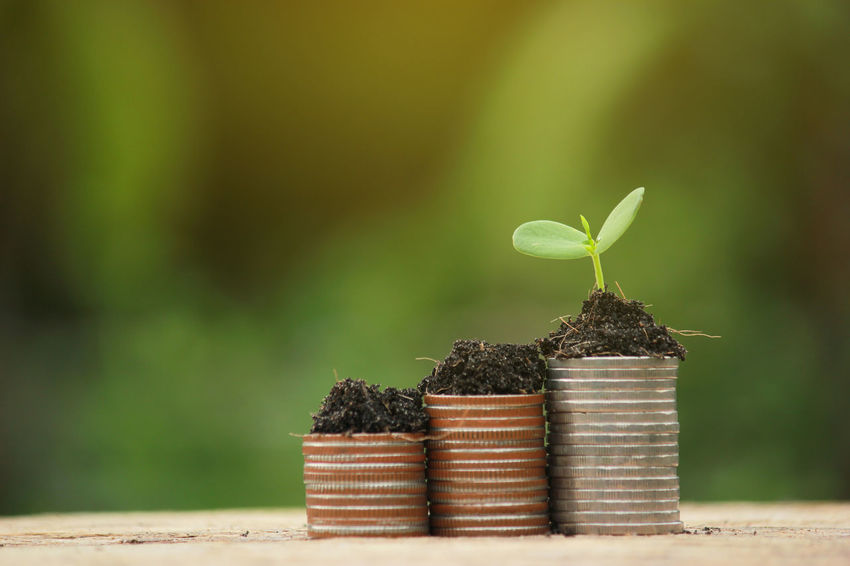 Business Economy Green Growing Growth Nature Plant Sapling Tree Trees Bank Coin Coins Finance Growth Leaf Money Nature Outdoors Plant Saving Seedlings Soil Success Tree