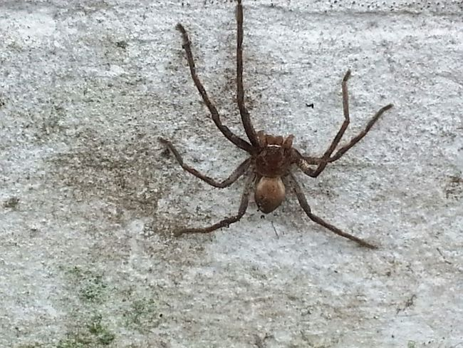Spider Scary Creepy Nature On Your Doorstep Arachnida