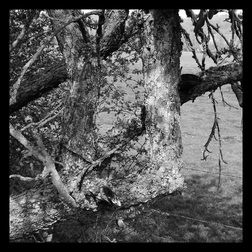 Day Outdoors No People Tree Nature Growth Blackandwhite Blackandwhite Photography Black&white Bnw_collection Bnw_demand Landscape France🇫🇷 Moselle Metz, France