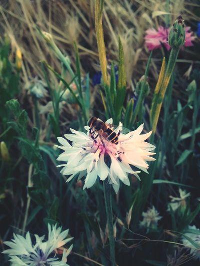 Flower and bee, follow me?(: Bee Flowers Backyard