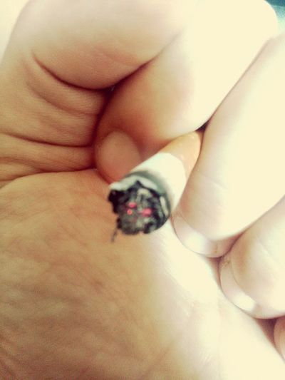 Smoke Smoke - Physical Structure Araund The World Today's Look My Hand  Love Smoking Human Hand Bed Close-up
