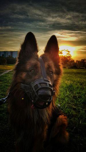 Sunset Pets