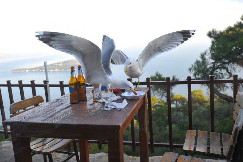 Seagulls on table against sea