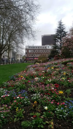 The spring arrived in town.. Flowers Park Colorful City Green Buildings Design Outdoors Nature Uk Southampton