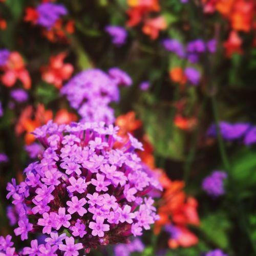 Flowers Kalmar Kalmarsommar Sweden summervacation
