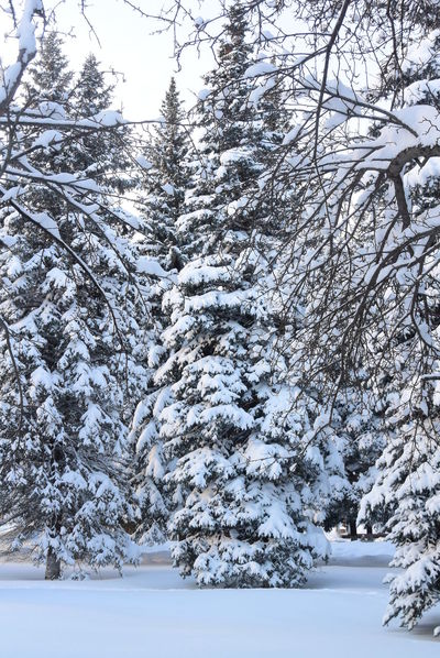 Зима.Мороз.Сказка😍 Winter Hello World Sound Of Life Relaxing деревья Nature Forest солнце Colors лес и природа сказка Зимняя сказка❄️⛄️❄️ Fairytale