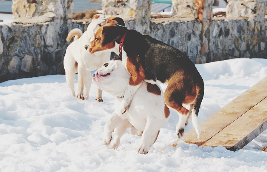 Dog Animal Themes Snow Mammal Cold Temperature Pets EyeEmNewHere Domestic Animals Weather Nature Field No People Togetherness Day Outdoors