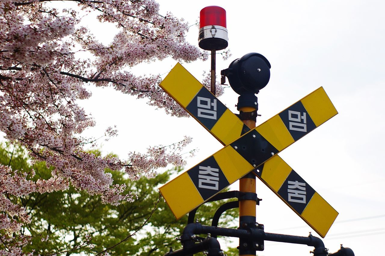road sign, low angle view, guidance, crossing sign, yellow, communication, no people, outdoors, stoplight, sky, day, direction, tree, railway signal, close-up, clear sky, nature