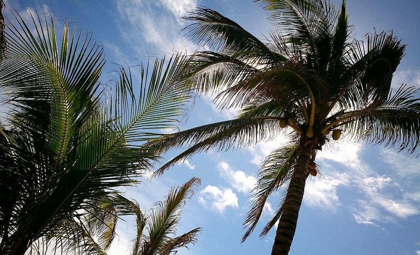Sun Palm Trees Traveling Enjoying The View Sky Beach No Filter Nature Photography Pacific Ocean Relaxing