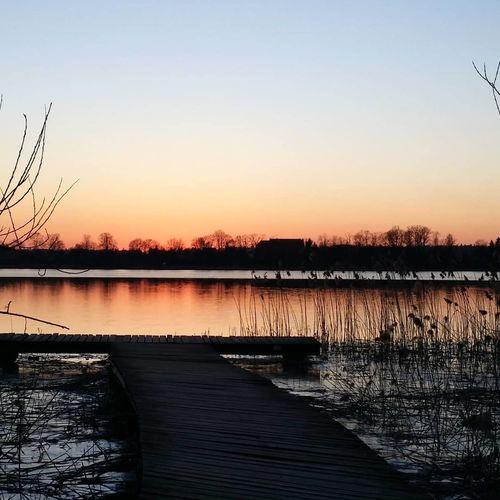 Bird Lake Tree