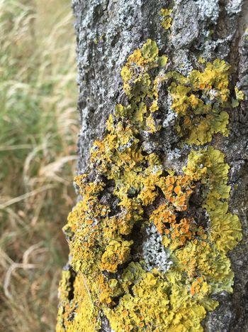 Lovely lichen Lichen Lichen On A Tree Lichen In Macro