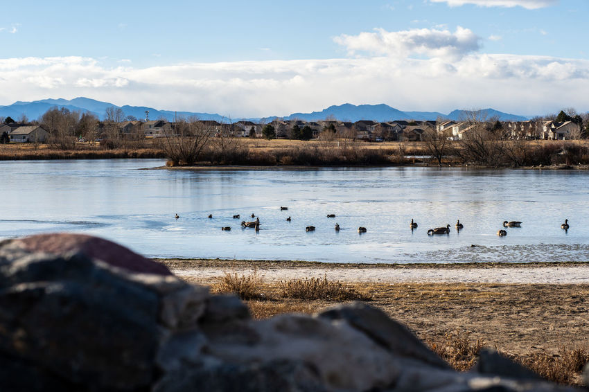 Water Beauty In Nature Group Of Animals Bird Lake Sky Animal Themes Mountain Colorado Denver Thornton Abbey