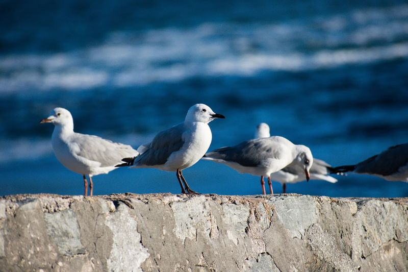 Seagulls perching on retaining wall