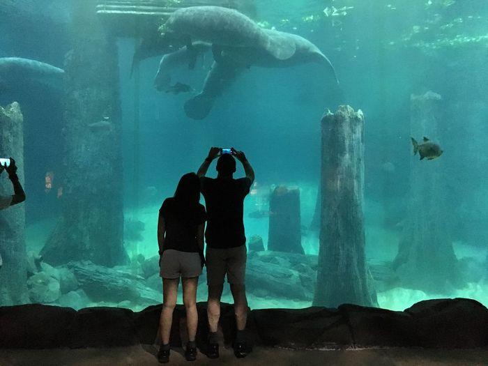Rear view of couple at aquarium