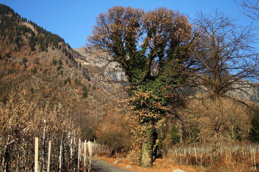 Autumn Colors Beauty In Nature Day December 2015 Landscape Majestic Nature No Snow  Non-urban Scene Scenics Tree Tree Trunk Wintertime