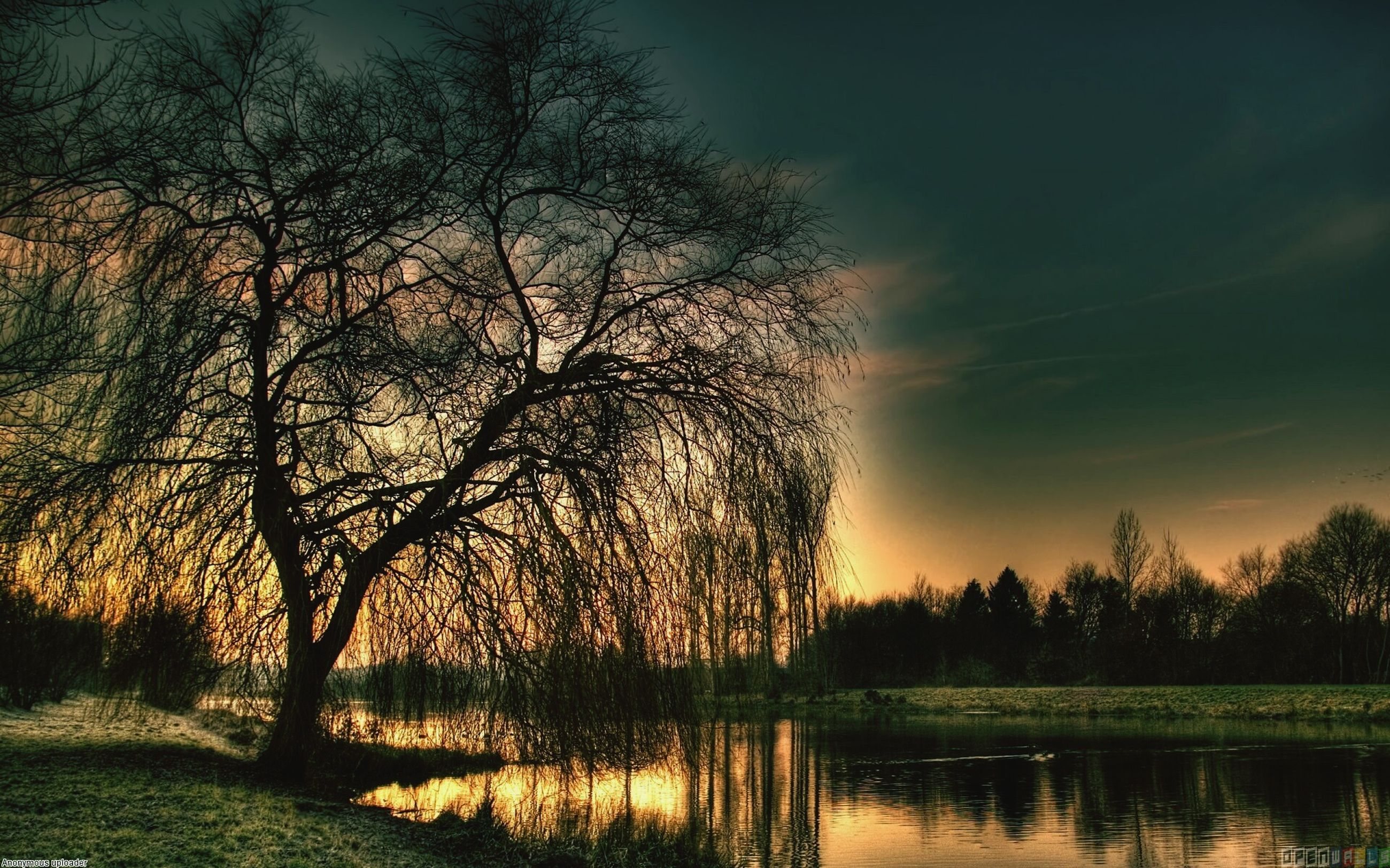 tree, water, tranquil scene, tranquility, sunset, silhouette, scenics, lake, beauty in nature, reflection, sky, nature, bare tree, idyllic, river, branch, waterfront, growth, non-urban scene, outdoors