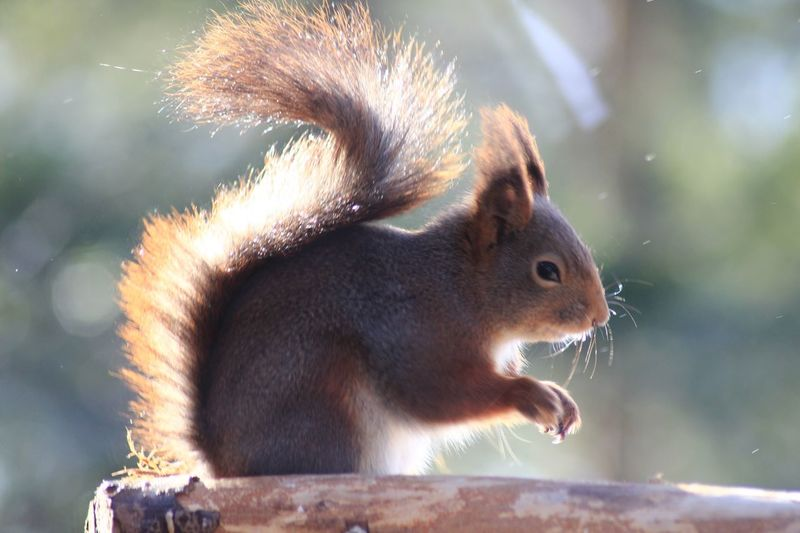 EyeEm Selects One Animal Animal Themes Animals In The Wild Squirrel Mammal Focus On Foreground No People Animal Wildlife Outdoors Close-up Nature Day