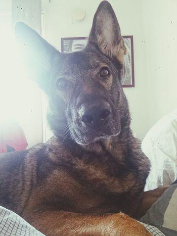 my dangerous...ly cute dog.