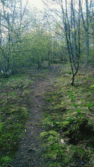 Nature Sweden Swedenisbeautiful Forest