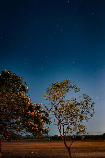 Low angle view of trees against clear sky at night