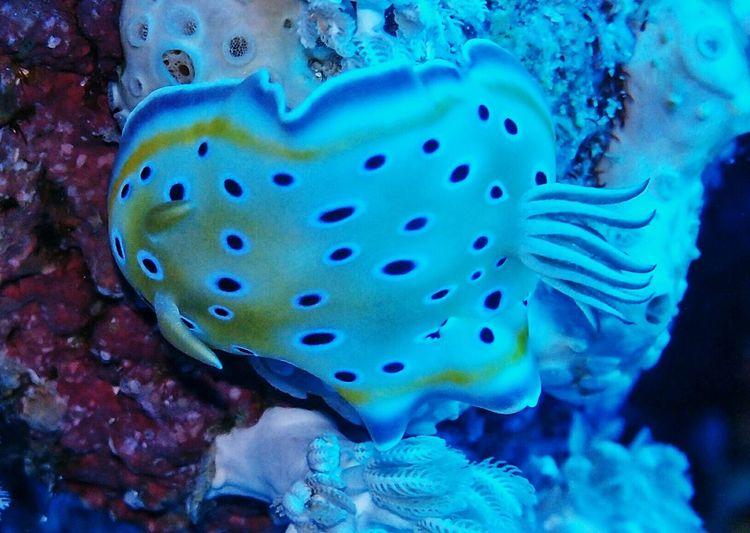 Nudibranch Underwaterphotography Beauty Nature Sea Marsa Alam