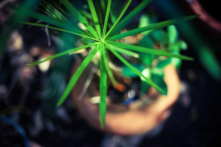 Light Light Light And Shadow EyeEmNewHere EyeEm Best Shots EyeEm Nature Lover EyeEm Selects EyeEm Gallery Eye4photography  EyeEm Eyeem Market Thailand Thai Thailand_allshots Top Tree Life Plant Beauty Leaf Close-up Green Color