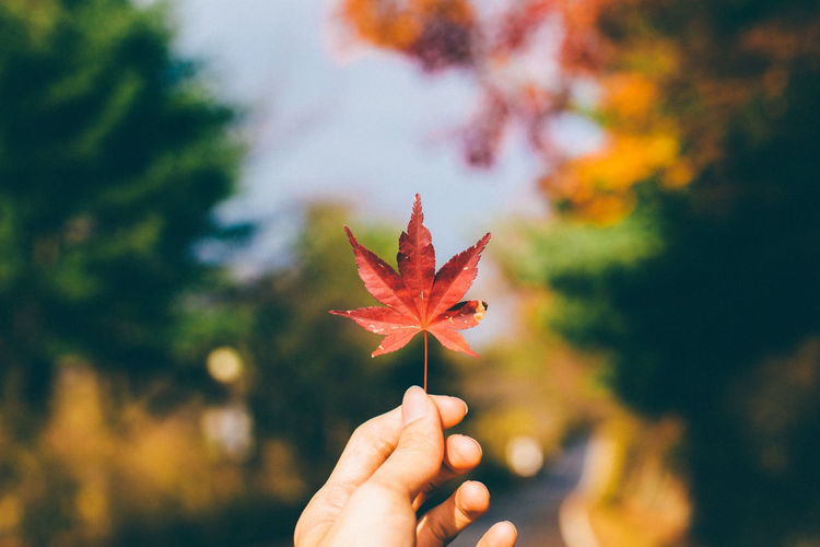 Close-up of woman holding maple leaf against sky