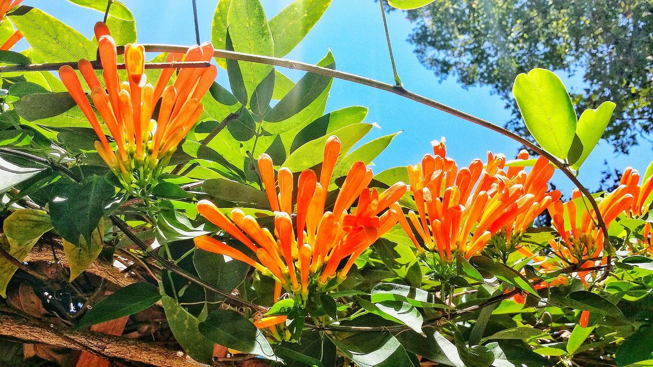 growth, flower, orange color, beauty in nature, nature, freshness, fragility, petal, plant, day, flower head, outdoors, leaf, bird of paradise - plant, no people, blooming, close-up