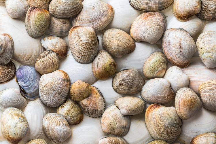 Full frame shot of snails