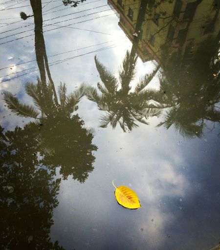 Water Reflection Leaf Floating On Water Nature Lake Standing Water Outdoors Tranquility Swimming Autumn Day No People Beauty In Nature Tree Sky Sea Life Lily Pad Photographer The Great Outdoors - 2017 EyeEm Awards The Street Photographer - 2017 EyeEm Awards Jashimsalam Maple Beauty In Nature High Angle View