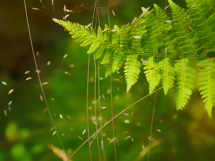 Grass Green Green Color Beauty In Nature Close-up Day Fern Focus On Foreground Fragility Freshness Green Color Growth Leaf Nature No People Outdoors Plant Perspectives On Nature