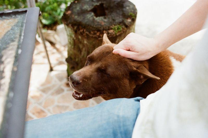 Cropped Image Of Man Stroking Brown Dog At Yard