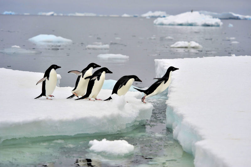 View of birds on frozen sea