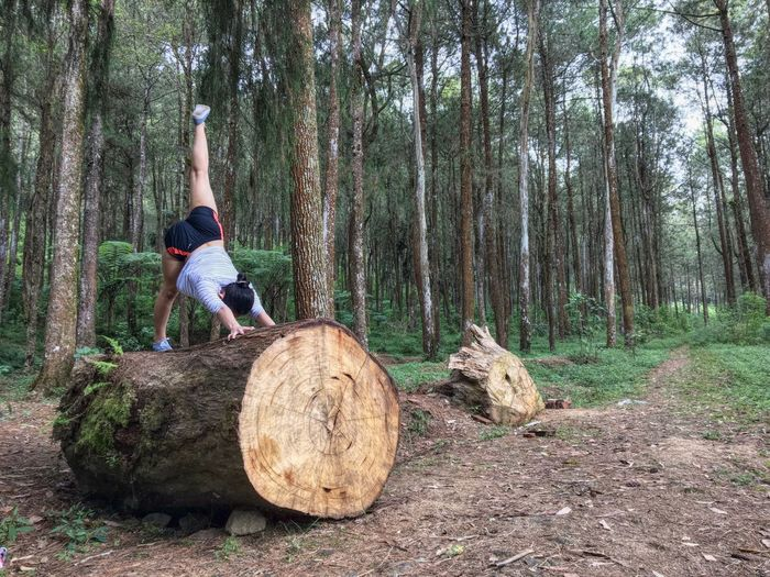 Yoga Training in The Middle Of Forest Yoga Exercise Forest Pine Tree Nature Landscape Photography