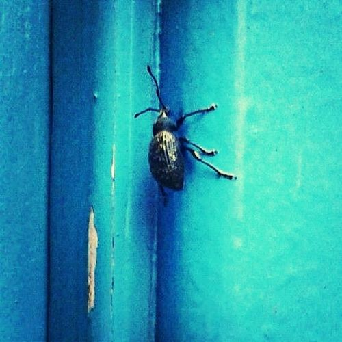 Bugs on my Door Insects  Nature