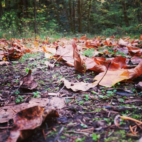 Leaves Autumn Leaves Autumn Colors Nature Fall Colors Fall Leaves Perspective Scattered