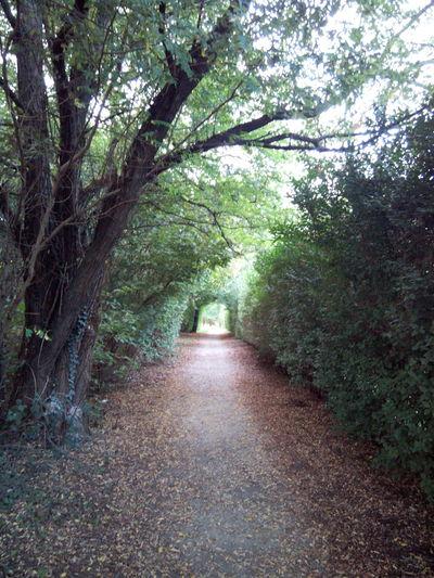 Rovellasca Trees