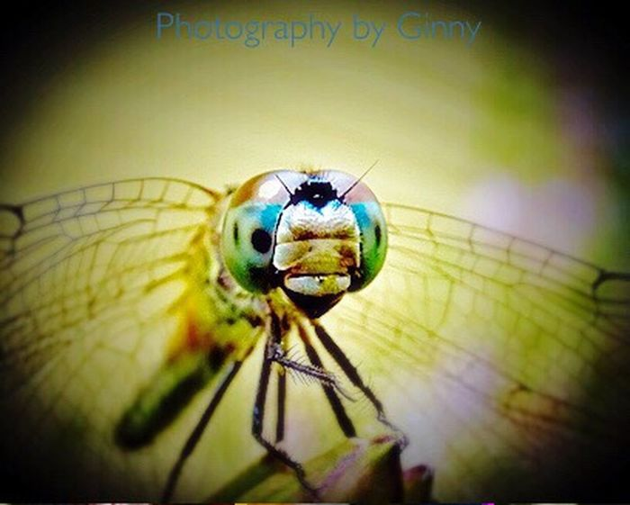 Blue Silver Tail Dragonfly Insect Close-up Nature No People Outdoors Day