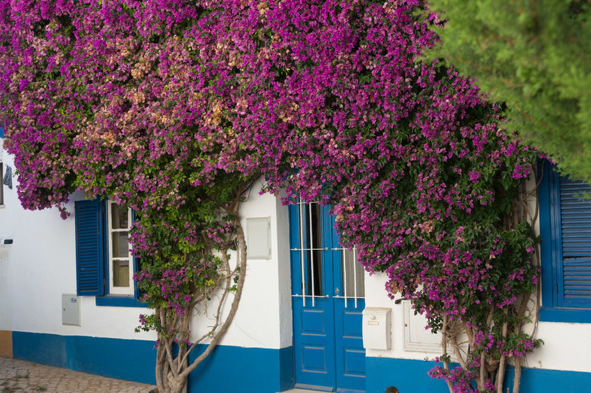Portugal 2017 2017 Algarve Atlantic Holiday Portugal Travel Architecture Building Exterior Built Structure Day Destination Ocean Outdoors Purple Sea Summer