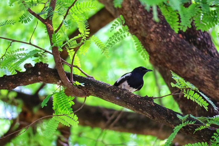 Bird Perching Tree Branch Leaf Full Length Songbird  Close-up