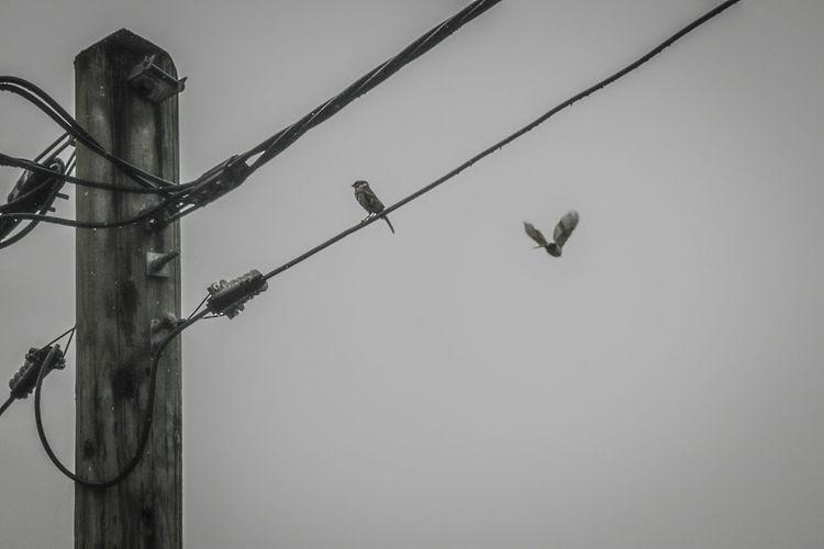 #Rain & these