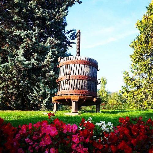 Old Winepress in Villamartinelli Bergamo Clearsky Flowers Garden Pointofview | october 11, 2015