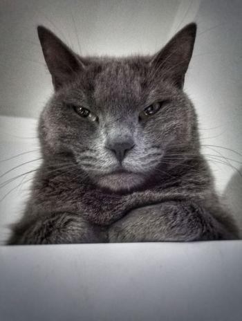 Catsagram Cat Cats