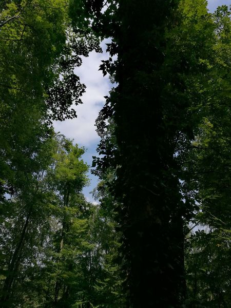 Tree Water Forest Tree Area Reflection Sky Green Color