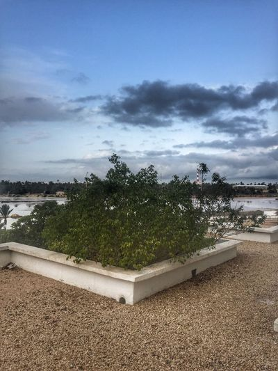 Gloomy day Tunisie Djerba  تونس جربة  Cloud - Sky Sky Day Nature Beauty In Nature Outdoors Tranquility No People