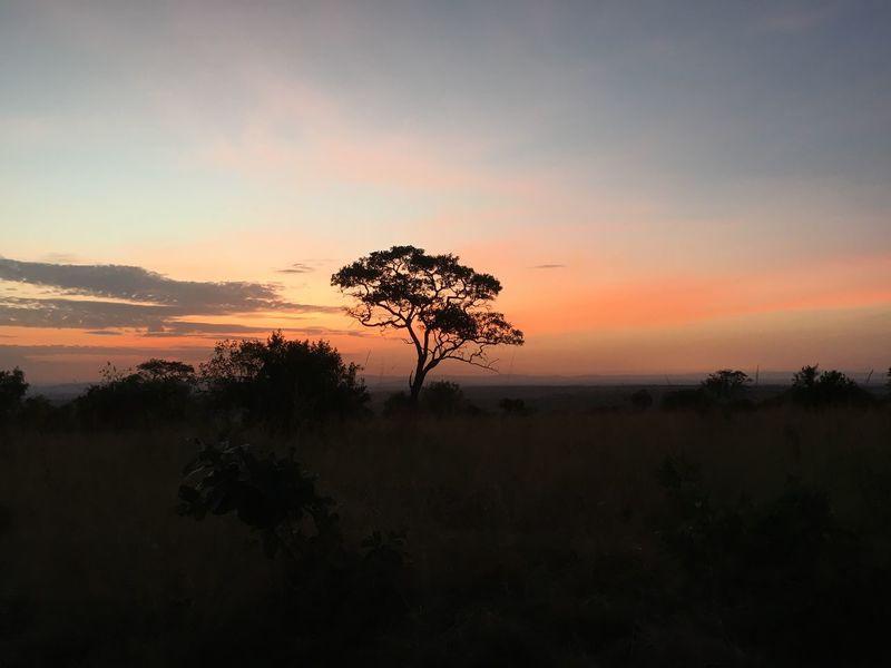 Color Palette Sunrise Acacia Tree Serengeti National Park