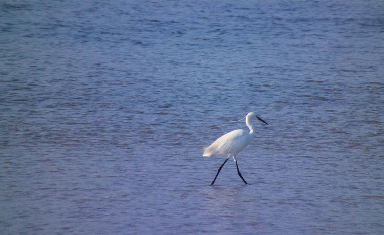 Bird Fauna Natura Nature San Teodoro Sardegna Sardinia Sea Bird Wildlife